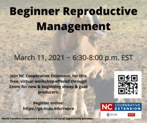Cover photo for Small Ruminant Reproductive Management Webinar